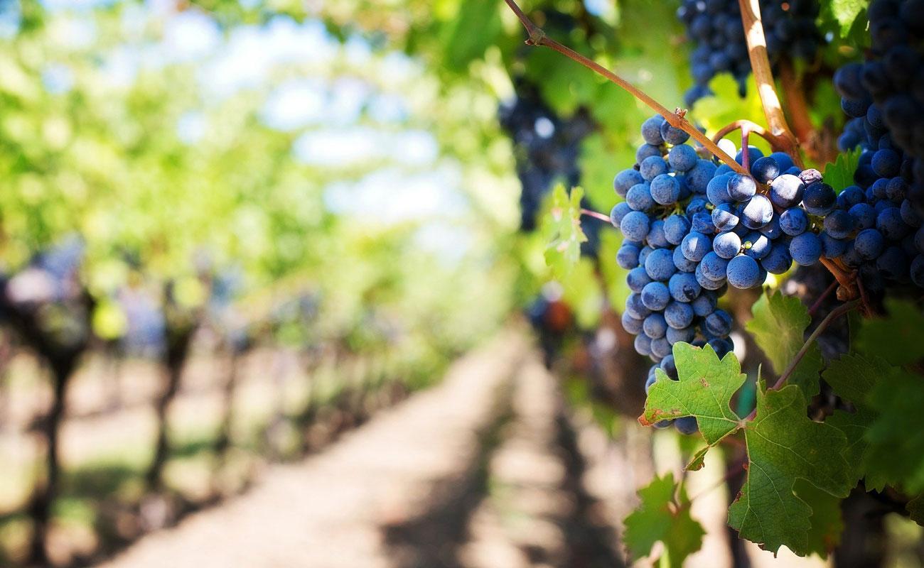 Cómo elegir un buen vino Ribera del Duero