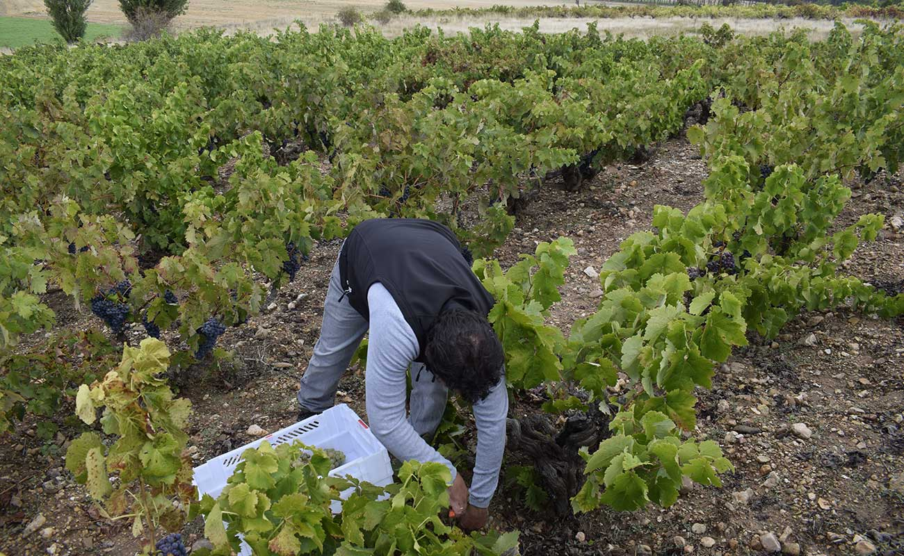 Vino de calidad en Ribera del Duero