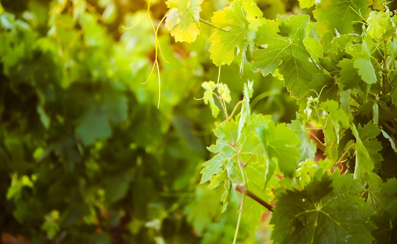 Los mejores vinos Ribera del Duero
