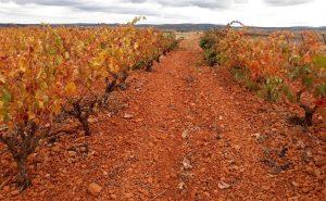Uno de los mejores vinos de parcela en Ribera del Duero